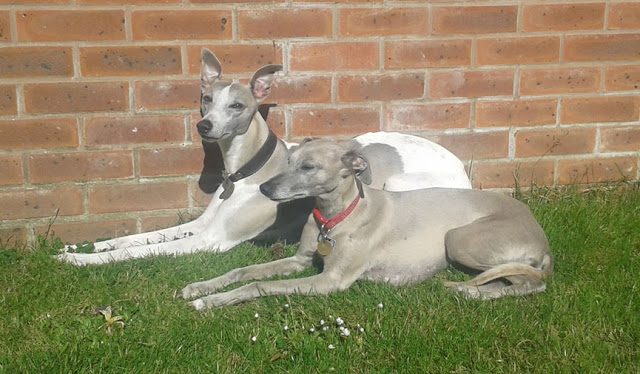 Harley and Bella_2015-06-08 08.49.33
