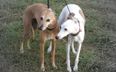 Roxy and Diva – Rehomed