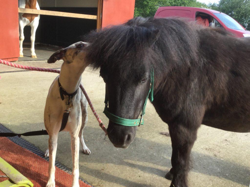 Jake With Pony